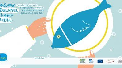 """Camera di commercio, concluso il progetto """"Hello fish"""". Domani la presentazione dei risultati"""