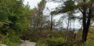 Un albero abbattuto nella zona del lago Angitola