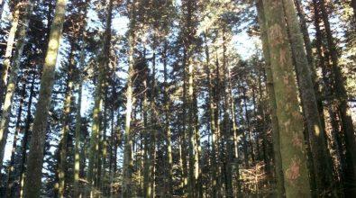 I sindaci del Parco delle Serre scrivono a Oliverio: «Rinnovi il progetto Natura e turismo»