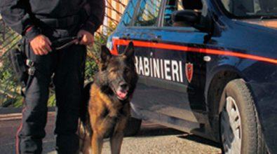 'Ndrangheta in Brianza, una vibonese nei ruoli apicali – NOMI