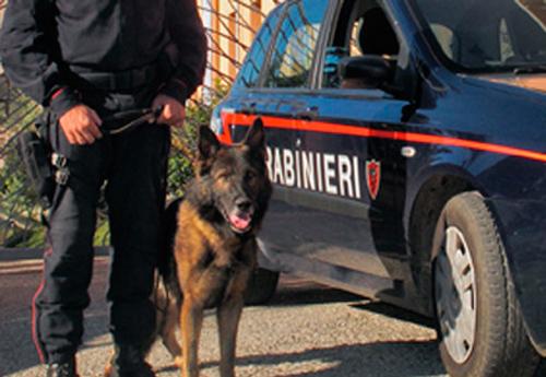 Controlli del territorio: un arresto a Rombiolo e due segnalazioni alla Prefettura