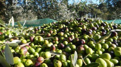 Rubavano olive alle suore, due arresti a Limbadi