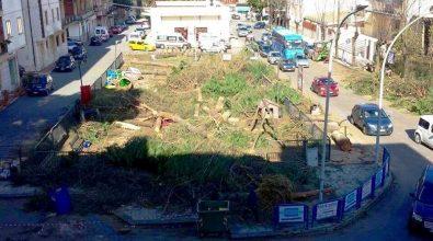 La logica illogica degli alberi sacrificati al dio cemento