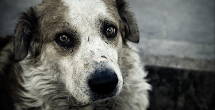 Randagismo, le associazioni animaliste si appellano al prefetto