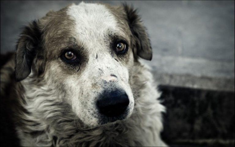 Cani randagi catturati e lasciati senza cure, l'Enpa pronta a denunciare l'Asp