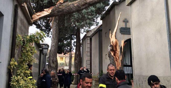 Vento forte, alberi abbattuti anche nel cimitero di Piscopio – FOTO