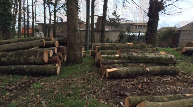 Taglio non autorizzato di alberi di alto fusto, sequestrato un ettaro di bosco
