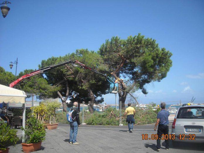 Taglio degli alberi a Vibo Marina