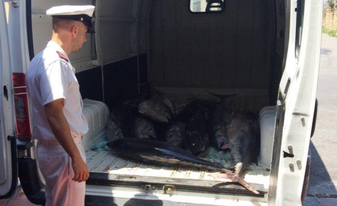 Il tonno sequestrato a Vibo Marina