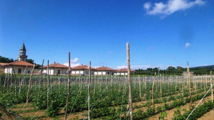Il campo coltivato a fagioli all'interno della Certosa