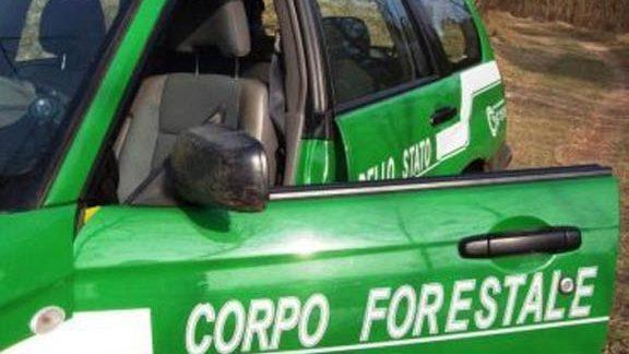 Si frattura la caviglia nei boschi di Mongiana e rimane bloccato: salvato dalla Forestale