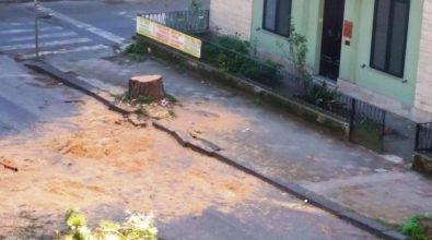 Gli alberi sono un pericolo o sono in pericolo?