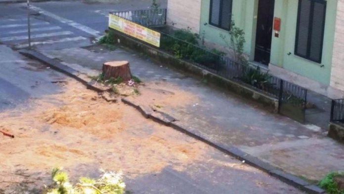 Ciò che resta del pino tagliato in via Dante Alighieri