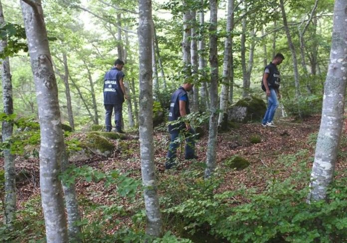 I finanzieri del Roan di Vibo tra i boschi delle Serre (Foto l'Espresso)