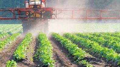 Stop al rinnovo del contratto provinciale: i lavoratori agricoli vibonesi in stato di agitazione