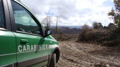 Pesca abusiva nel lago Angitola e taglio illegale di alberi a Vallelonga, 7 denunce