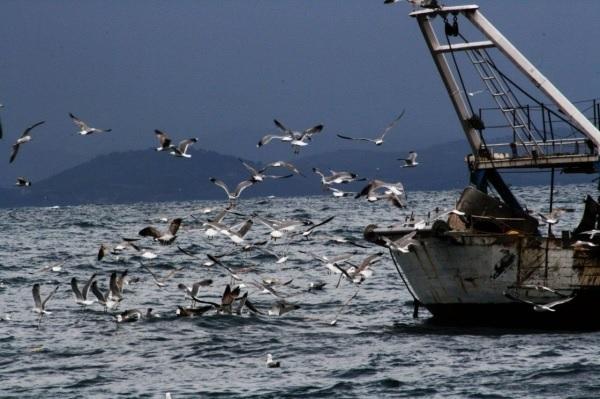 Vibo Marina: i problemi della pesca in un incontro con Nicodemo Oliverio (VIDEO)
