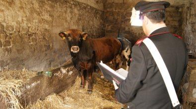 Sanzioni e sequestri nel Vibonese in tre aziende agricole
