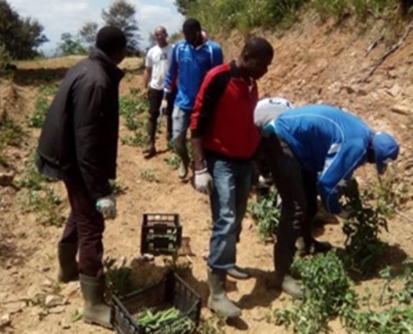 """Vallelonga, l'azienda """"La Cona"""" apre all'agricoltura sociale per i migranti"""
