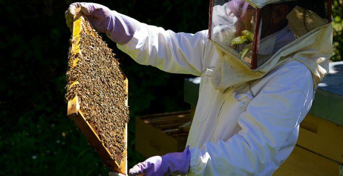 Sequestrate nel Vibonese 25 arnie di un allevamento apiario