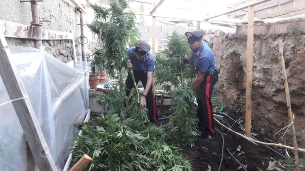 Coltivazione e detenzione di marijuana, rideterminata pena per 35enne di Nicotera
