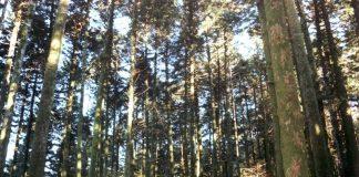 Un bosco nelle Serre vibonesi