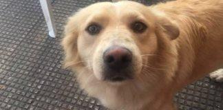Zungri, il cane Billy