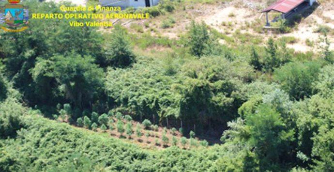 Piantagioni di canapa indiana per venti quintali scovate nelle Preserre (VIDEO)