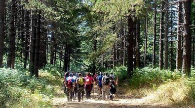 """Grande partecipazione al secondo """"Trekking day"""", da Cardinale ai boschi vibonesi"""
