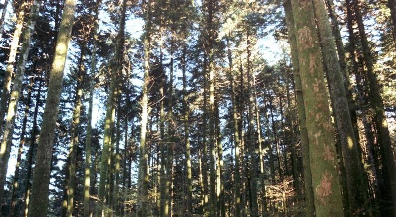 Un bosco nelle Serre vibonesi. In basso la scorsa edizione