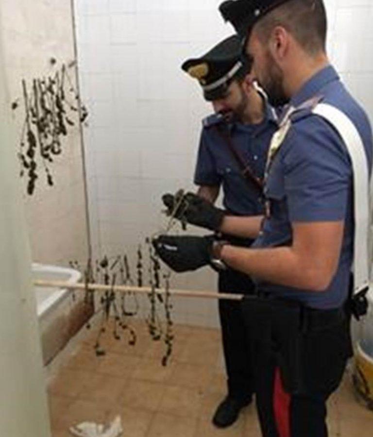 Marijuana in essicazione trovata dai carabinieri nelle Preserre