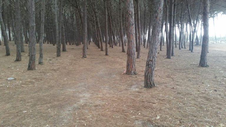 Sorpresi a disboscare la pineta Colamaio: tre arresti a Pizzo