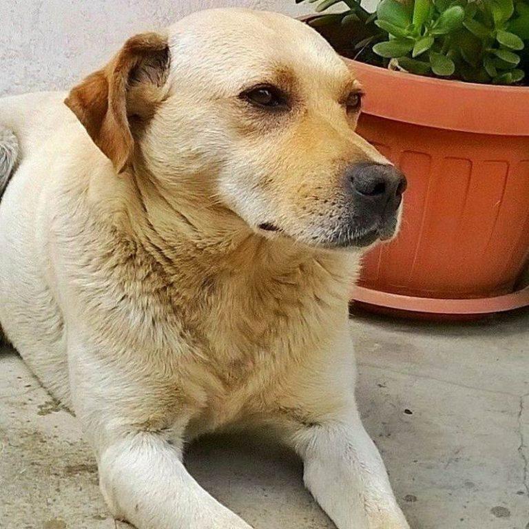 La tragica fine del cane Birillo, ucciso a colpi d'arma da fuoco a San Costantino Calabro
