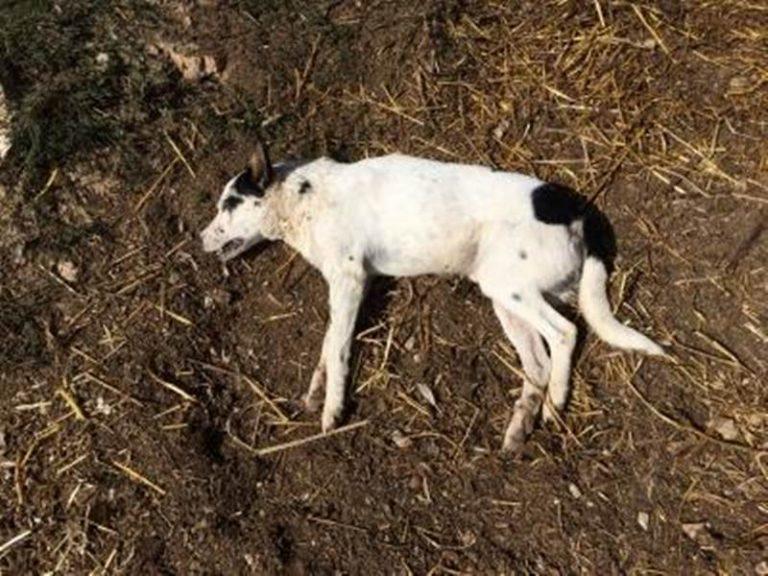 Mileto: raid al Maranathà, ucciso con un'ascia il cane del Centro