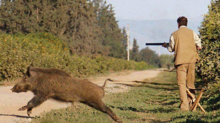 Caccia nel Vibonese, denunce e sanzioni