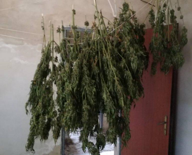 Mezzo chilo di marijuana trovata fra Monterosso e San Nicola da Crissa