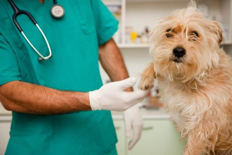 Ordine dei veterinari di Vibo, ecco gli assetti del Consiglio direttivo