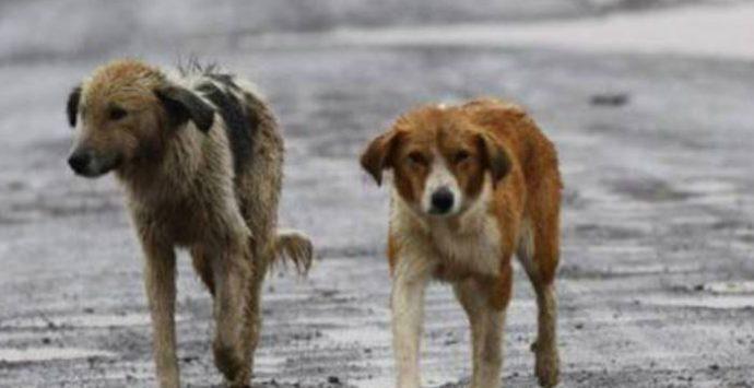 Abbandono degli animali reato crudele: la campagna del Comune di Vibo contro il fenomeno
