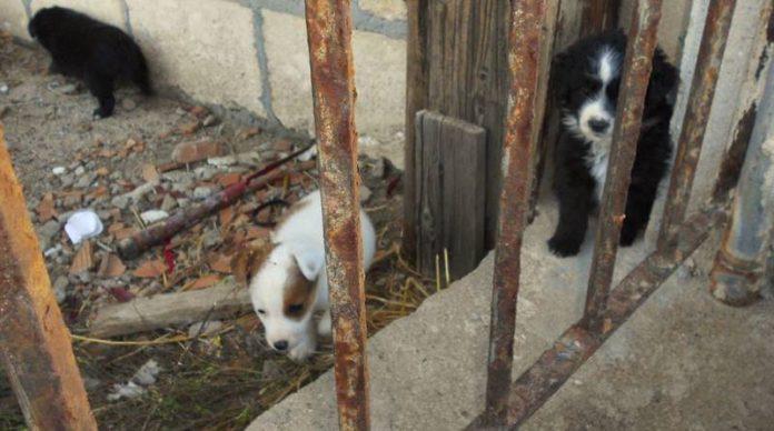 Briatico, alcuni dei cuccioli abbandonati