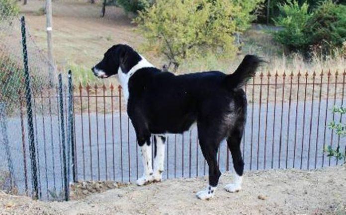 Un cane in un cortile