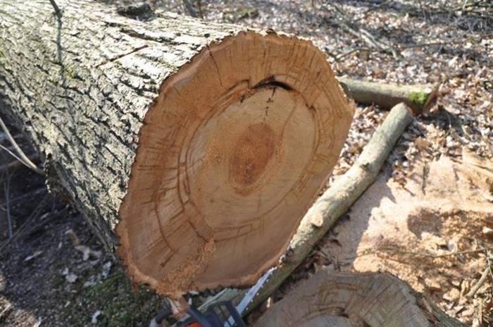 Sorpreso a tagliare alberi di castagno nel Parco delle Serre, arrestato 29enne di Gerocarne