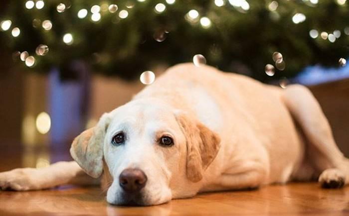 """""""No"""" ai botti di Capodanno, l'appello del Wwf a favore di animali …e non solo"""