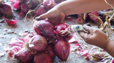 Cipolla di Tropea, il Consorzio di tutela chiarisce: «Nessun rischio per la produzione»