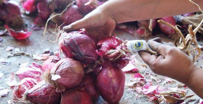 Cipolla rossa di Tropea Calabria Igp, autorizzato nuovo ente di certificazione