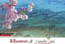 """""""I colori della Primavera"""", foto vincitrice del contest 2017 de Il Vibonese"""