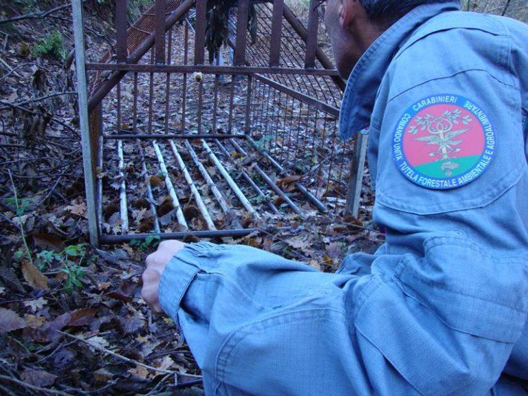 I carabinieri forestali sequestrano una strada abusiva nelle Serre