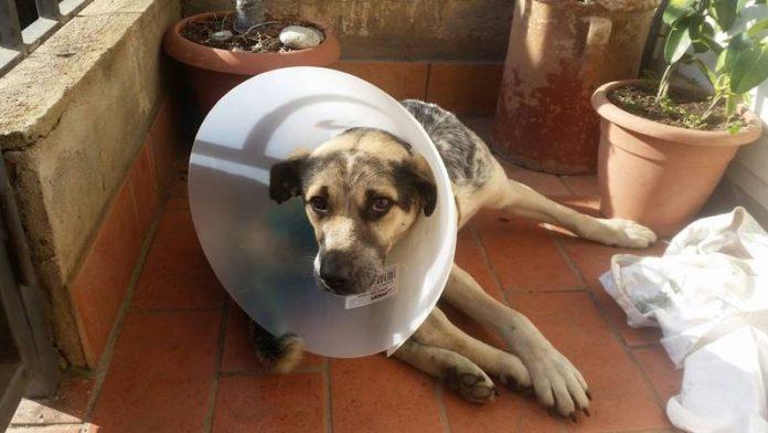 Il cane salvato a Francica