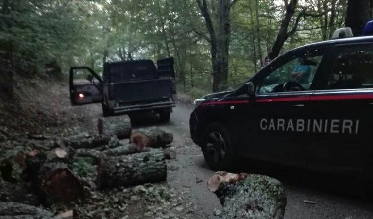 Taglio di alberi e legna per 250 quintali nel Parco delle Serre, tre arresti (VIDEO)