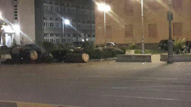 Vibo Valentia: abbattute le ultime palme di piazza Municipio