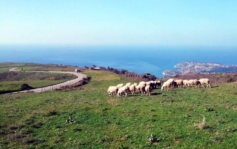 Sviluppo del turismo rurale nel Vibonese, si attivano Cna e Cia